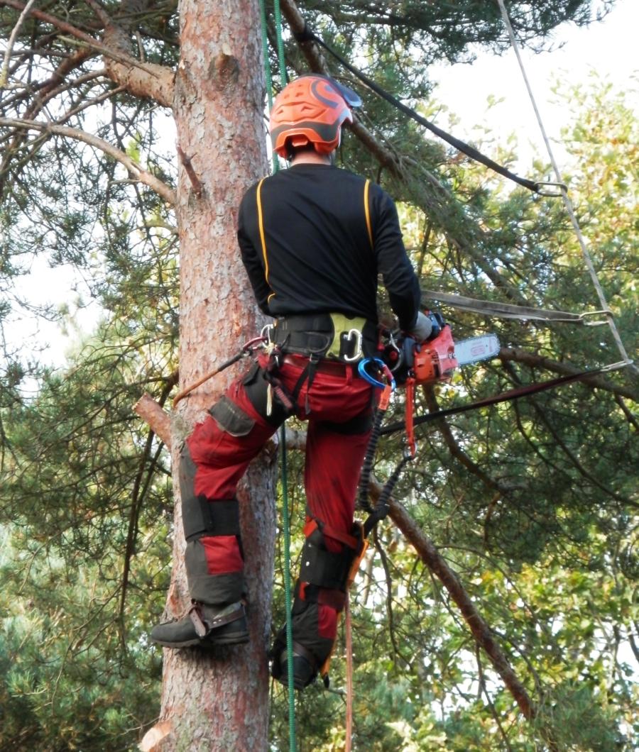 tree surgeon 1766132
